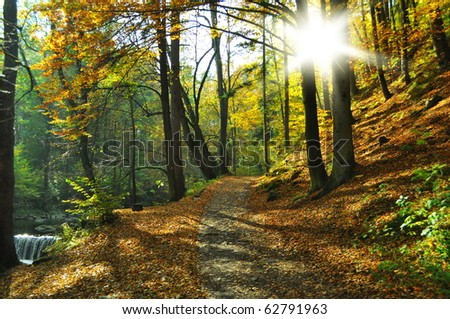 path on autumn time