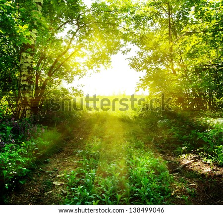 Path out of the deep forest in the sun
