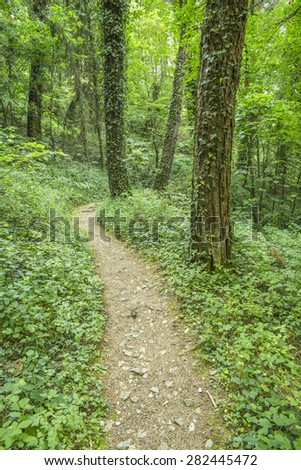 path road in the green forest - stock photo
