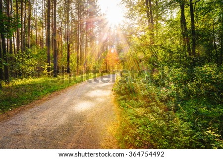 Path Road Way Pathway On Sunny Day In Summer Sunny Forest at Sunset or Sunrise. Nature Woods in Sunlight - stock photo