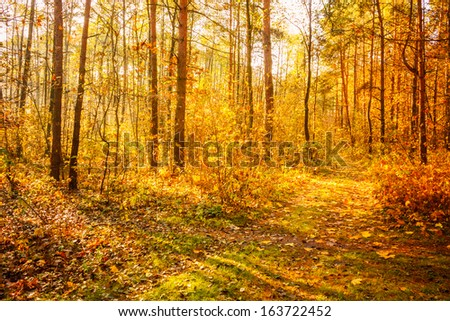 Path road way pathway with trees on a sunny day in autumn yellow forest. Russian nature