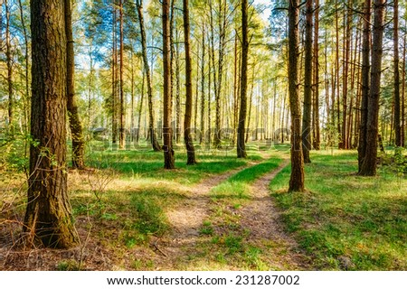 Path Road Way Pathway With Trees On Sunny Day In Summer Forest. Sunbeams Pour Through Trees. Russian Nature - stock photo