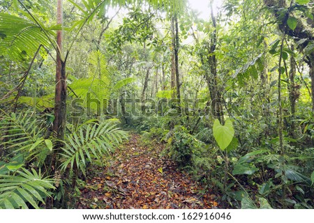 Path running through a cloudforest nature reserve on the Pacific slopes of the Andes in Ecuador - stock photo