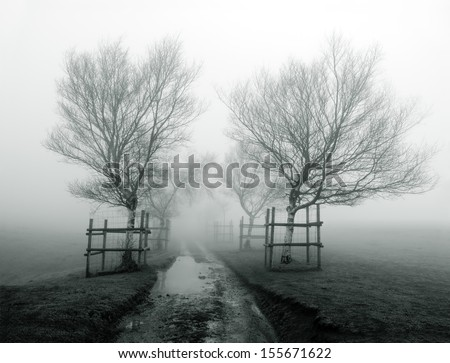 path surrounding by trees in the fog - stock photo