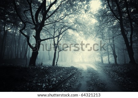 path through a dark forest - stock photo