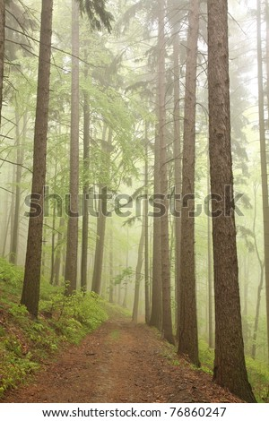 Path through a foggy forest in the rainy spring morning. - stock photo