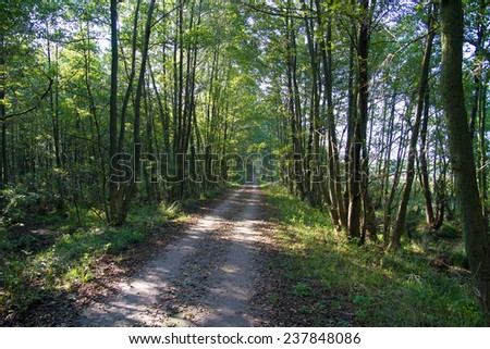 path through a forest - stock photo