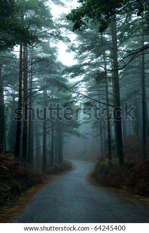 Path through a forest with high trees and mist - stock photo