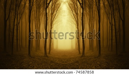 path through a golden forest at sunrise with fog and warm light