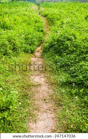 Path through a many trees - stock photo