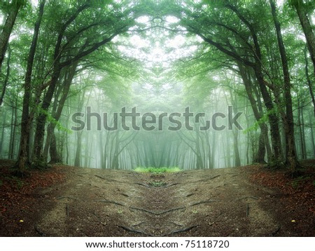 path through a mysterious forest - stock photo