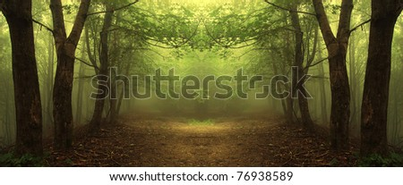 path through a mysterious green forest - stock photo