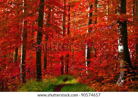 Path through an autumn forest with red leaves - stock photo