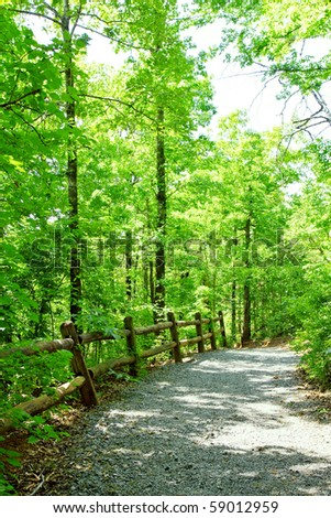 Path through green forest - stock photo