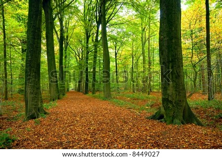 path through lush forest - stock photo