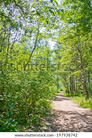 Path through summer forest in sunny day - stock photo