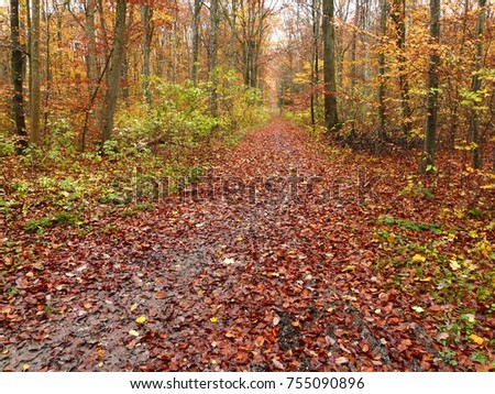 Path through the autumn forest with foliage and trees in the background