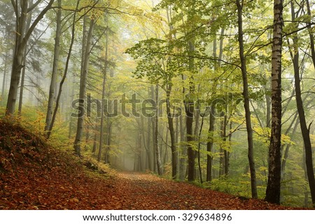 Path through the autumnal beech forest. - stock photo