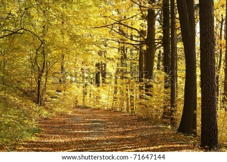 Path through the autumnal forest backlit by the setting sun. - stock photo