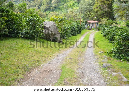 Path through the coffee plantation in the highlands of Boquete, Chiriqui region - stock photo