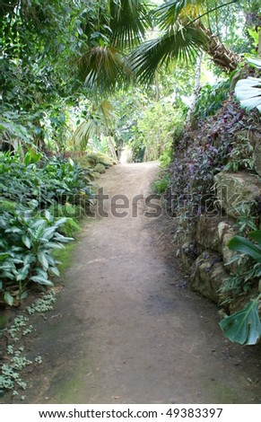 path through the  forest - stock photo