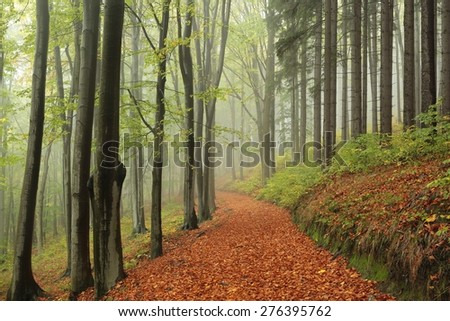Path through the forest on a foggy autumn morning. - stock photo
