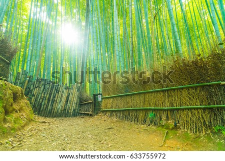 Path to bamboo forest at Arashiyama in Kyoto, Japan with sunflare