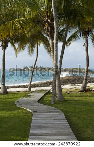 path to beach through palm trees, bahamas - stock photo