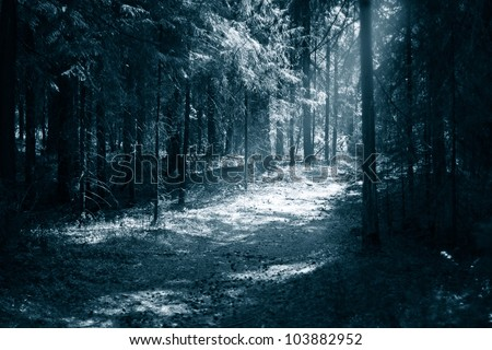Path to light through a dark forest at night - stock photo