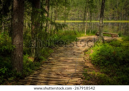 path to the forest lake - stock photo