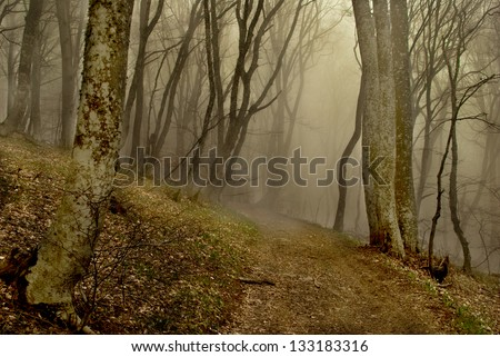 Path to the forest with fog - stock photo