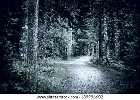 Path winding through dark moody forest with old trees at night - stock photo