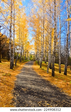 Pathway in autumnal yellow forest - stock photo