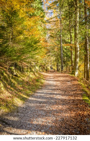 Pathway in beautiful forest in autumn.