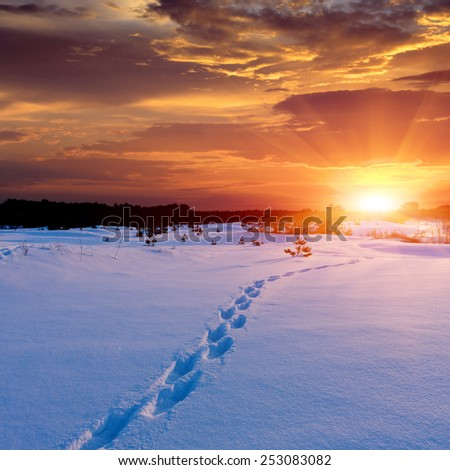 pathway in forest meadow on sunset background - stock photo