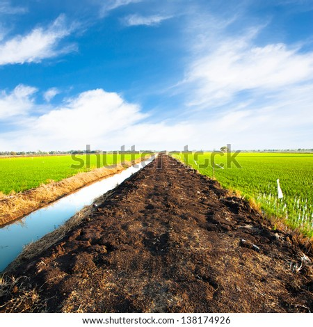 Pathway in rice field and blue sky with cloud - stock photo