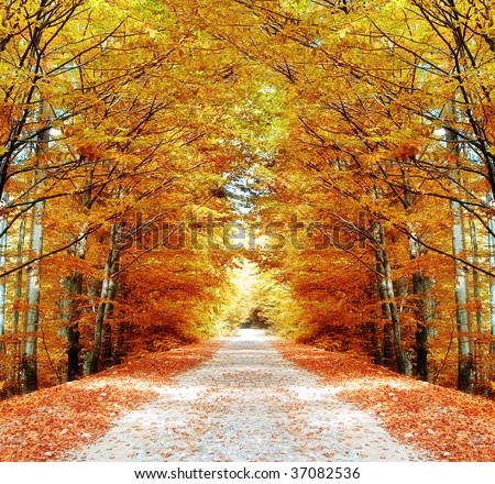 Pathway in the forest - stock photo