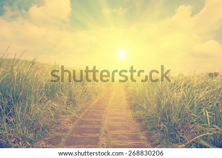 Pathway in the grass- instagram style - stock photo