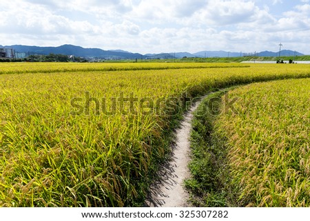 Pathway though rice field