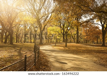 Pathway Through Central Park, New York City - stock photo