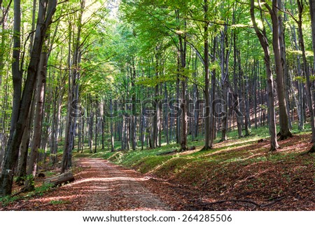 Pathway through the autumn forest in Hungary