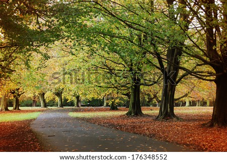 Pathway through the park in autumn