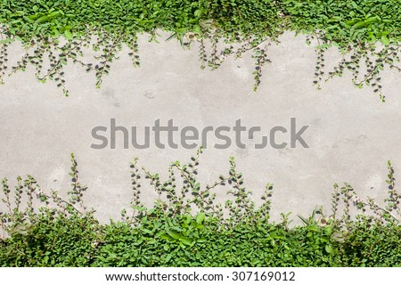 Pathway with natural green grass,in garden