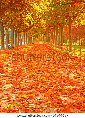 Pathway with nice leaves at autumn, Spain - stock photo