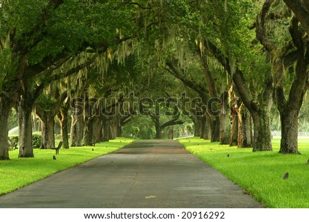 Pathway with spanish moss on trees on Florida's Gulf Coast. Madeira Beach Florida - stock photo