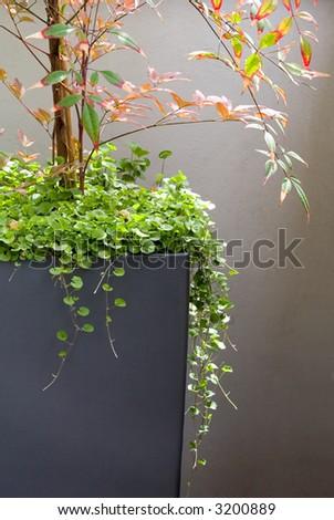 Patio container - stock photo