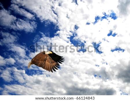 Patriotic composite of a Bald Eagle (Haliaeetus leucocephalus) soaring in a blue cloud filled sky. - stock photo