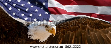 patriotic eagle taking wing in front of US flag - stock photo