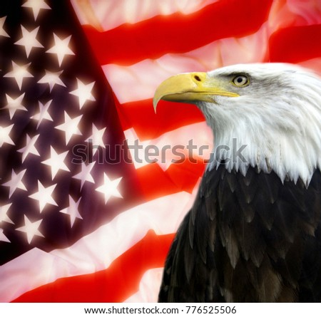 American Symbols Of Patriotism American Eagle Stock I...