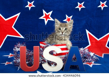 Patriotic tabby kitten, blue background with red stars outlined in white, kitten sitting in red and white stripped box tinsel with red white blue U.S.A. blocks in front of him her - stock photo